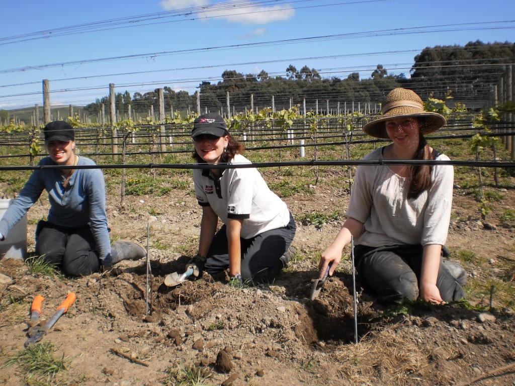 Christin, Sandra and Frederike planting