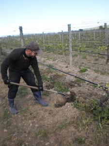 Robert digging